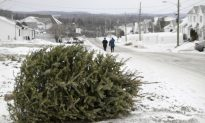 City Will Collect Christmas Trees in January