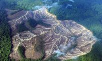 Illegal Loggers Should Be Treated Like Gangsters Says World Bank