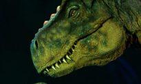 New Dinosaur Extinction