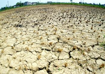 A dried up field at a farm in the outskirts of Changsha, central China's Hunan province 04 August 2003, as a devastating drought grip large parts of China. (STR/AFP/Getty Images)