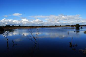 Edithvale Swamp
