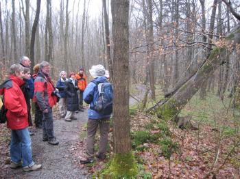 """Hainich Nature Park motto: """"Let nature be nature."""" The best way to experience this area is with a guide. (Elke Backert/The Epoch Times)"""