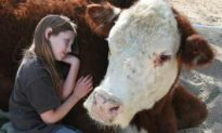 The Gentle Barn Aims to Help Children and Animals Alike