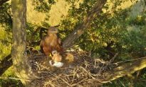 Plastic Bags in Nest: 'Keep Out!'