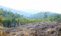 Protected Forests Failing to Protect