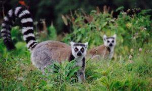 Wildlife Smuggling Nets Big Bucks For Organized Crime