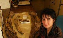 150-Million-Year-Old Pliosaur Had Arthritic Jaw