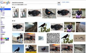 ONLY MALES FELL IN ARKANSAS: A screen shot of a search in Google images showing photos from the bird fall in Arkansas. All the birds photographed were males. (The Epoch Times)