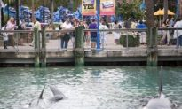 SeaWorld Death Brings Attention to Captive Whales