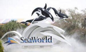 SeaWorld Trainer Dies in Orca Tank