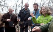 New York: Parks Get Blight-Resistant American Chestnut Seeds