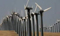 Wind Turbines Lethal for Migratory Bats