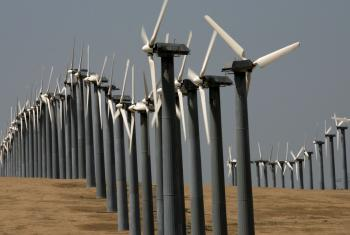 Rows of wind turbines at the Altamont Pass wind farm in Byron, California. when bats fly close to a turbine blade they can experience a sudden air expansion in their respiratory system, causing their lungs to rupture. (Justin Sullivan/Getty Images)