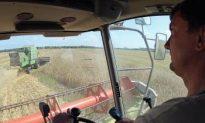 Russia, Ukraine to Ban Grain Exports