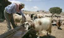 Water Access a Casualty in Middle East Conflict