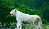 Toronto Zoo Names Animals