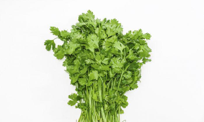 Fresh cilantro bunch. (anmbph/iStock)