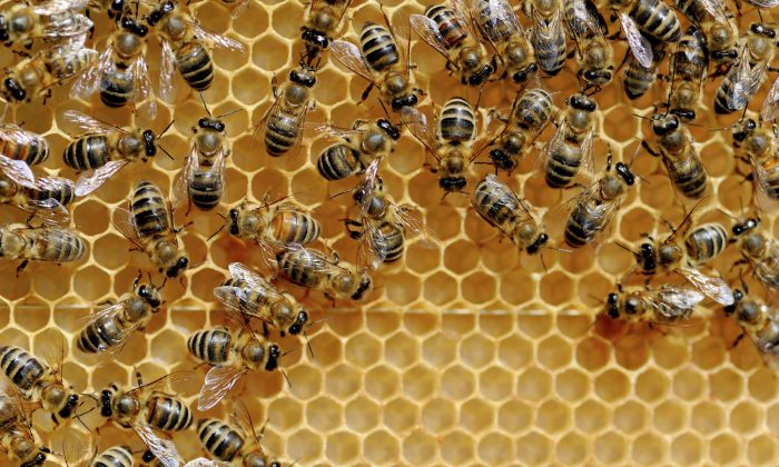 Medical science is rediscovering the healing power of honey. (Byrdyak/iStock)