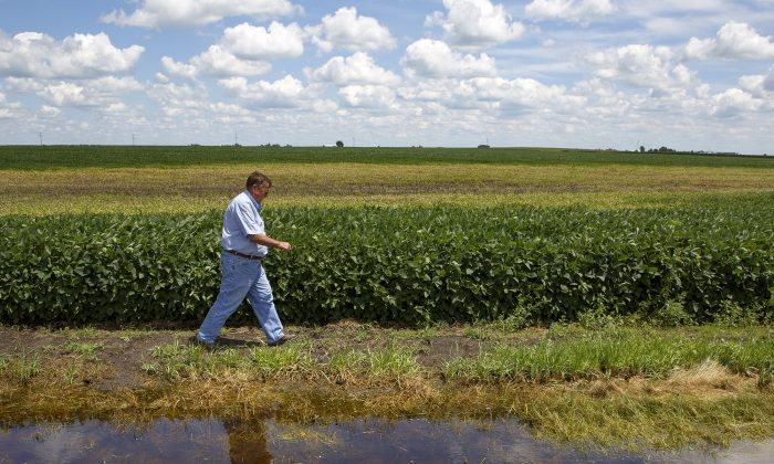 Farmer Wayne Cross walks past an area of standing water covering 10 acres of his field in which is now unable to yield any crops after constant rainstorms in the area in Buffalo, Ill., on July 21, 2015. (Rich Saal/The State Journal-Register via AP)