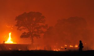 Californians Facing Nights in Wildfire Evacuation Shelters