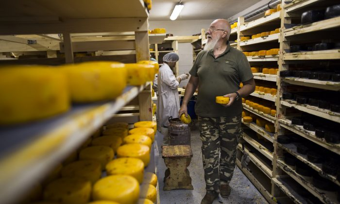 In this photo taken on Wednesday, Aug. 5, 2015, John Kopiski, a British-born business executive who came to Moscow for a 3-day business trip and ended up staying for more than 20 years, controls the process of cheese making in a storage at his farm in Krutovo village, Vladimir region, about 220 kilometers (some 140 miles) east of Moscow, Russia. (AP Photo/Alexander Zemlianichenko)