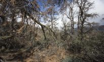 Extreme Droughts Weaken Trees' Ability to Soak Up Carbon