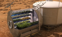 Watch Astronauts Eat Space-Grown Lettuce For First Time (Video)