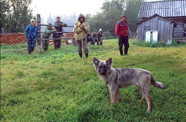 The dog that helped Karina survive. (Sakha Republic Rescue Service)