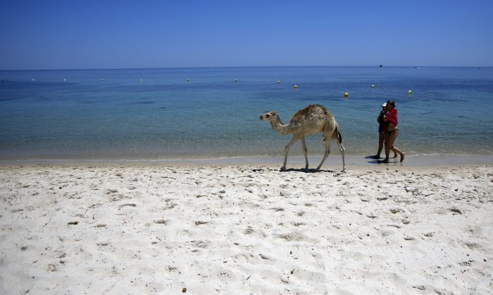 Tourists and a baby camel walk on a beach in front of the Imperial Marhaba Hotel in Sousse, Tunisia, Sunday, June 28, 2015. Tunisia's top security official says 1,000 extra police are being deployed at tourist sites and beaches in the North African nation. (AP Photo/Darko Vojinovic)