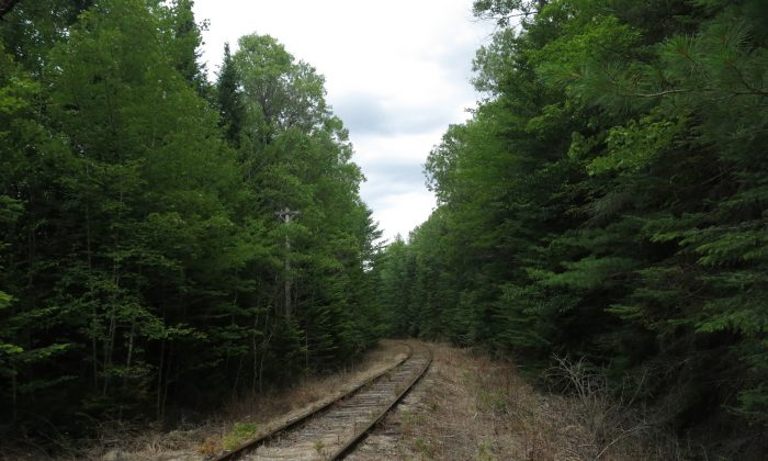 In this August 8, 2015 photo, seldom-used railroad tracks owned by Iowa Pacific Holdings vanish into the Adirondack forest in Newcomb, NY. (AP Photo/Mary Esch)