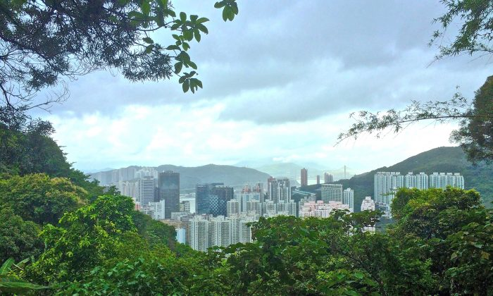 A view from the jogging path overlooking Tsuen Wan, after the stair climb. (Philip Evich)