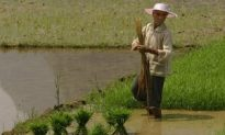 Unpaid Wages Cost Farmers Four to Every One Yuan