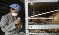 New China Flu Death May Mean Bird Cases Undetected