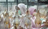 Scientist Urges Review of Chinese Bird Flu Measures