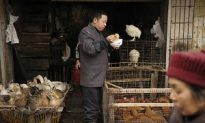 Bird Flu Showing Signs of Mutation Says China Expert