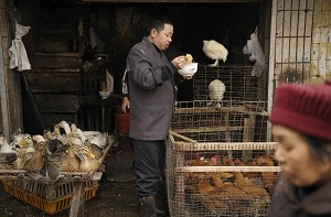 Two people have died of the deadly H5N1 strain of bird flu in China in the last month. The health ministry said the latest fatalities mean that at least 19 people have died of bird flu in the country with ten other patients recovering. (Peter Parks/AFP/Getty Images)