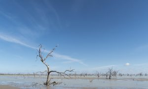Drought Can Kill Trees for Years and Years