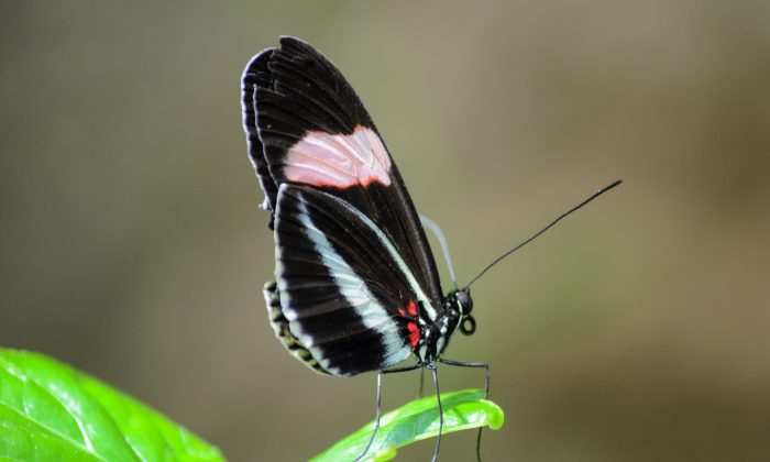To take advantage of the butterfly effect, a new forecasting approach treats the weather as random and uses historical data to force the forecast to reflect a realistic climate. (Robert Claypool/CC BY 2.0)