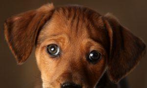 9 Ways to Celebrate National Dog Day