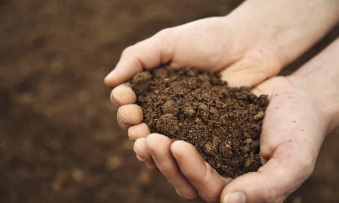 """""""Reclaimed soil may not necessarily be used to grow food, but it certainly could be used for re-greening: planting grass to minimize erosion and to restore vegetation,"""" says Pedro Alvarez. (blueenayim/iStock)"""