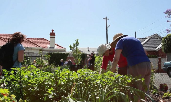 Digging up that nature strip and planting tomatoes is one way of reducing consumption. (Mosman Council/CC BY 2.0)