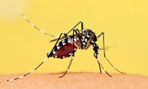 Pregnant Woman in Connecticut Tests Positive for Zika Virus