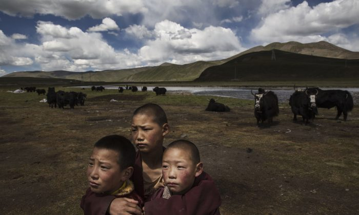 Young Tibetan Buddhist novice monks stand in  the grasslands of their nomadic camp on July 24, 2015 on the Tibetan Plateau in Madou County, Qinghai, China. (Kevin Frayer/Getty Images)