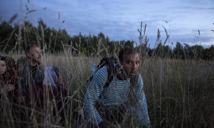 Refugees are smuggled through fields and forests in an attempt to evade the Hungarian police close to the Serbian border on September 8, 2015 in Roszke, Hungary. (Dan Kitwood/Getty Images)