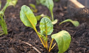 How Do Plants Remember Past Droughts?