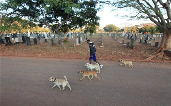 A man exercises as he walks dogs, in the Warren Hills Cemetery in Harare.