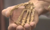 Scientists Find Bones of New Human Relative Buried in a Cave (Video)
