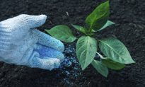 How Fertilizer Alters Soil Microbes Around the World