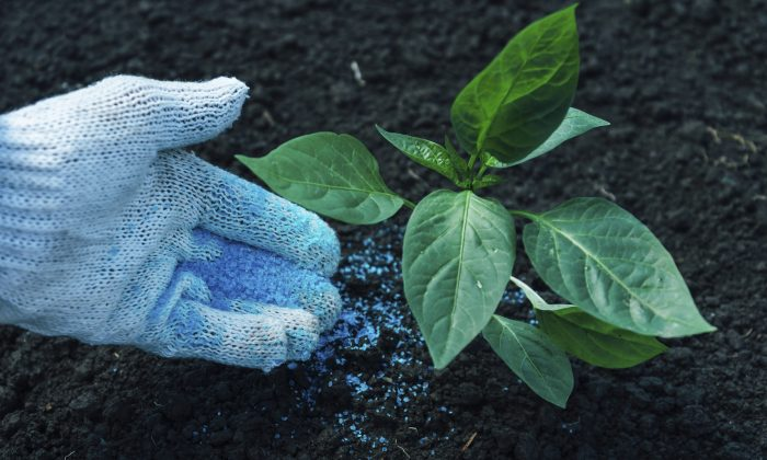 Fertilizers have an impact on microbial communities that may have negative environmental consequences. (Remains/iStock)