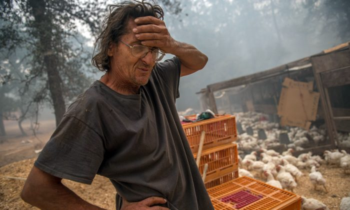Norman Gussel discusses the potential of losing 2,000 organic-raised chicken on his family-owned farm, which cost around ten dollars each on Sept. 12, 2015, in Mountain Ranch, Calif.  (Andrew Seng/The Sacramento Bee via AP)